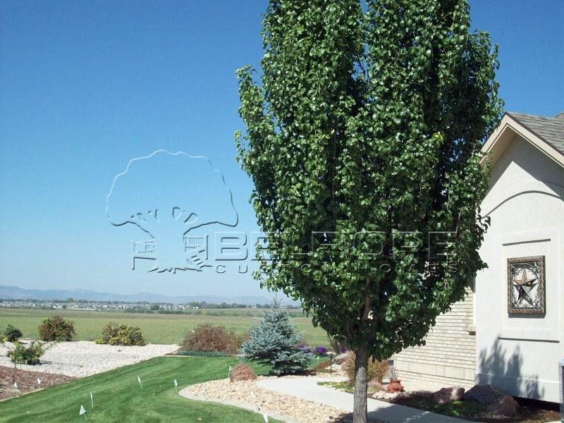Belfiore Portfolio Custom Home At Eagle Ranch Estates
